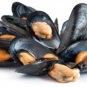 Cozza  (mollusco bivalvo)